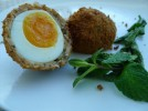 Chicken or Egg Scotch Eggs- 'Tree of Life'